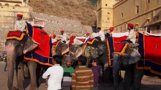 Fort Amber - Vorbereitung Elefantenritt