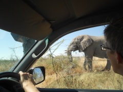 Elefant Nebenan