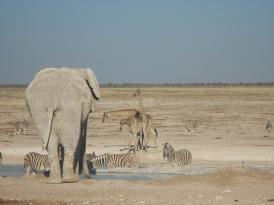 Elefanten_Wasserstelle