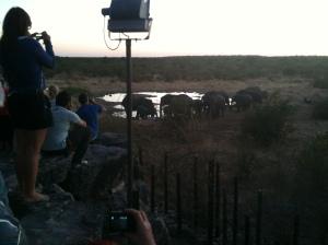 Wasserstelle Halali