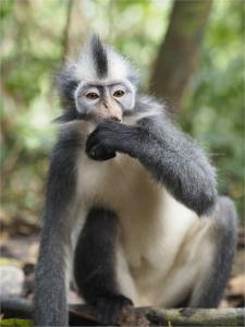 Punky Monkey
